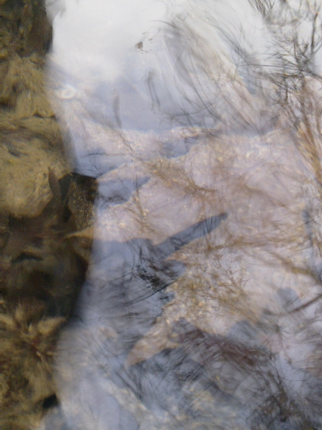 WATER MIRRORING 1 SIGFRIDSSON