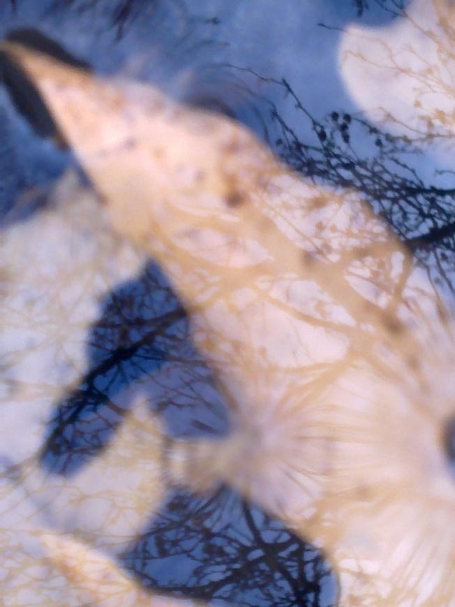 AESTHETICA 1 SIGFRIDSSON