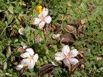 FALLEN ALMOND FLOWERS