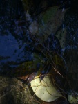 WATER MIRRORING - 1 SIGFRIDSSON