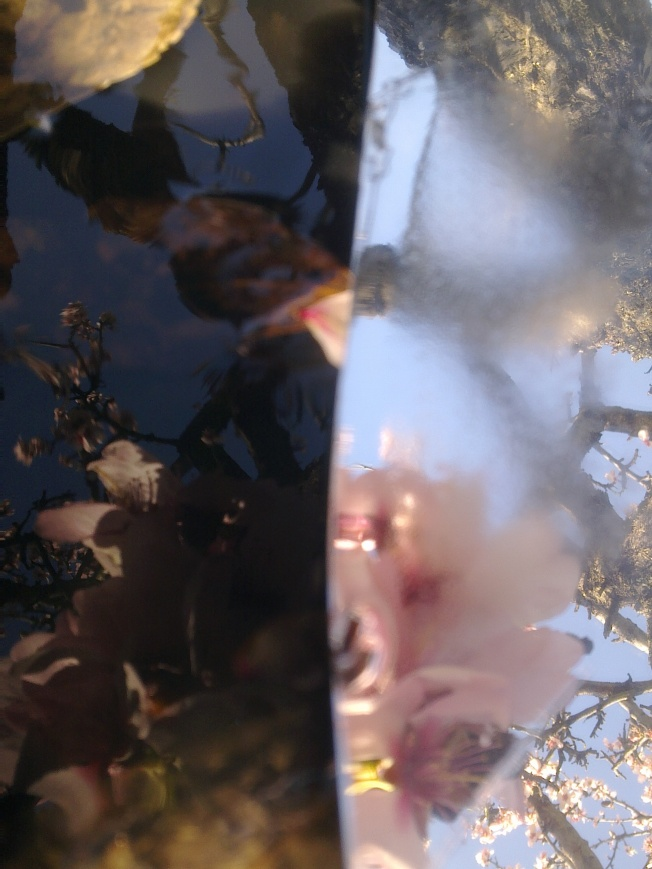 CLARITY (MIRRORING ALMOND FLOWERS) 4