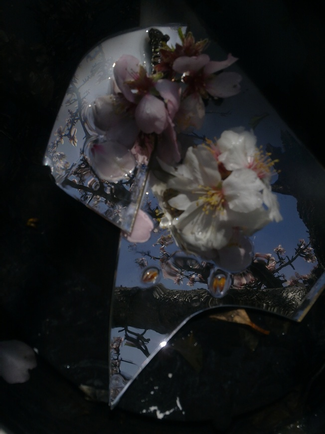 CLARITY (MIRRORING ALMOND FLOWERS) 3