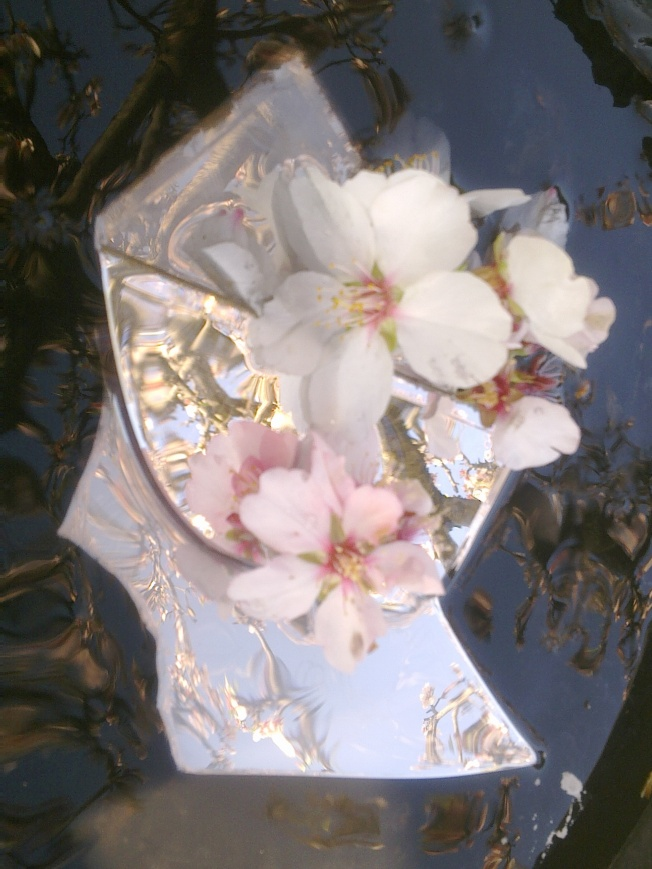 CLARITY (MIRRORING ALMOND FLOWERS) 1