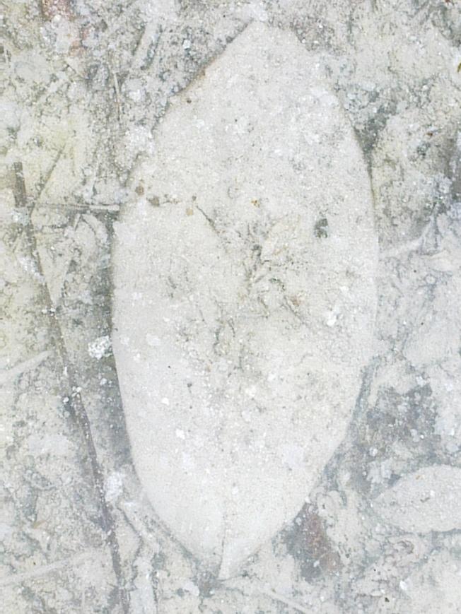ESOEXO 1