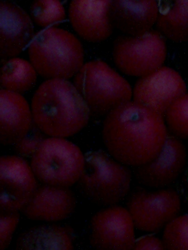 NIGHT APPLES