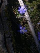 SPRING FLOWERS 5
