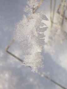 HANGED FROST 19