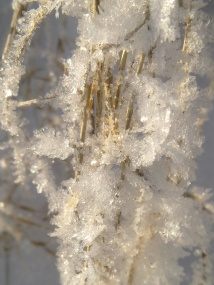 HANGED FROST 8