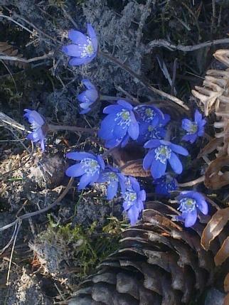 SPRING FLOWERS 11