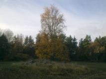 field-island-24