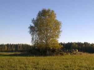 field-island-25