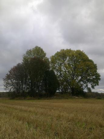 field-island-27