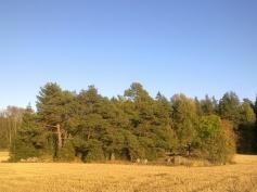 field-island-29