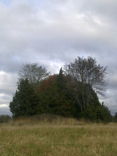 field-island-31