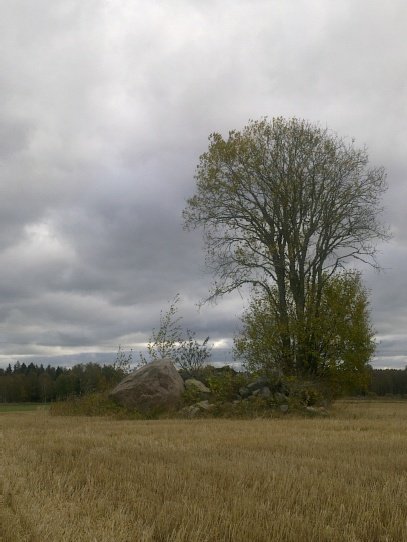 field-island-32