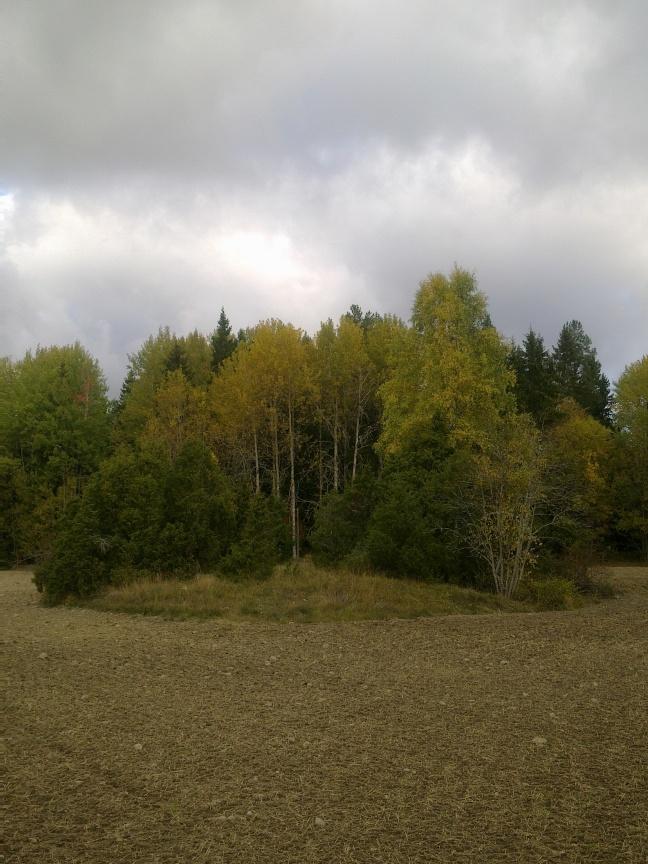 field-island-36
