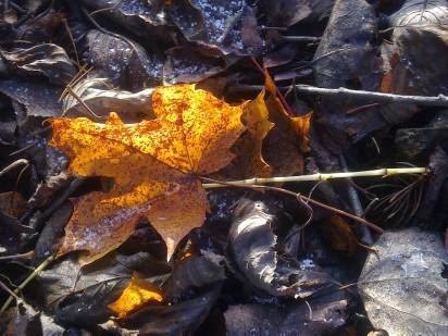inside-autumn-iii-2