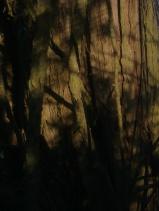 wood-juniper