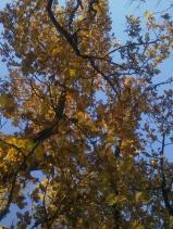 wood-oak-ii