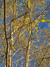 wood-willow-ii