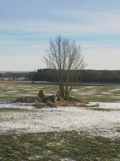 field-island-48