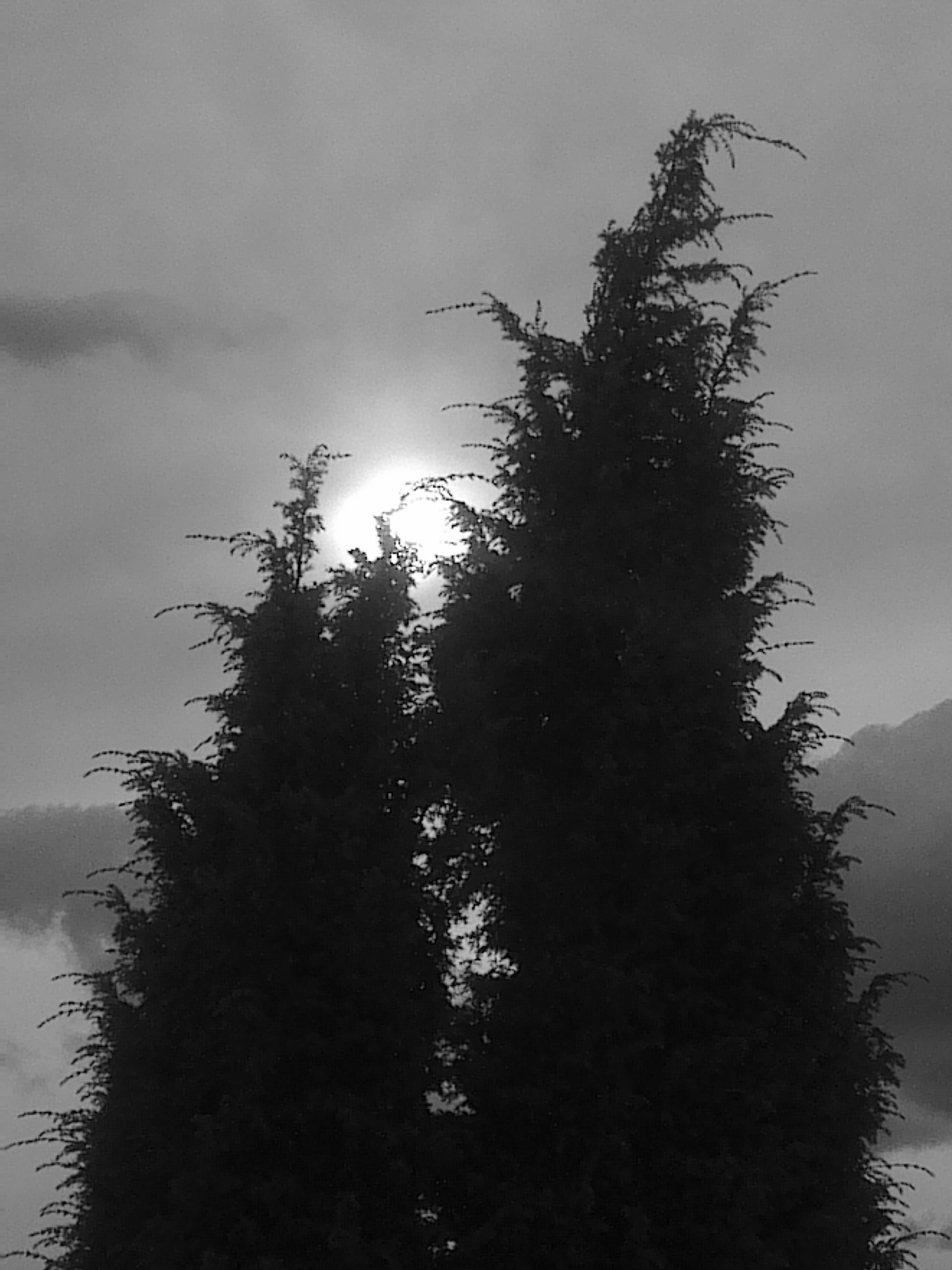 SUNBRANCHES
